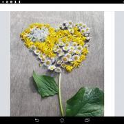 Merci - Landart coeur Cervon